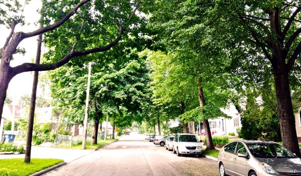 trees in suburban neighborhood