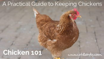 A Practical Guide to Keeping Chickens - Chicken Care - Oh Lardy!