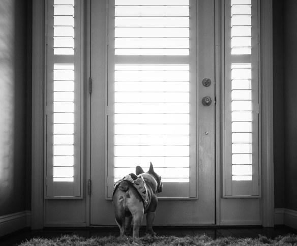 kate_juliet_photography_pets_melvin_023032-2