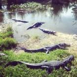 Everglades National Park, další z úžasných zážitků a blízké setkání s aligátory