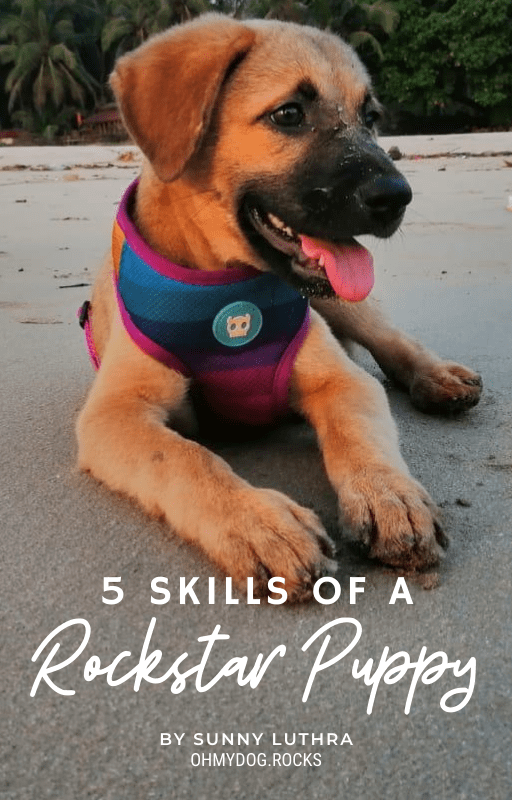 5 Skills Of A RockStar Puppy