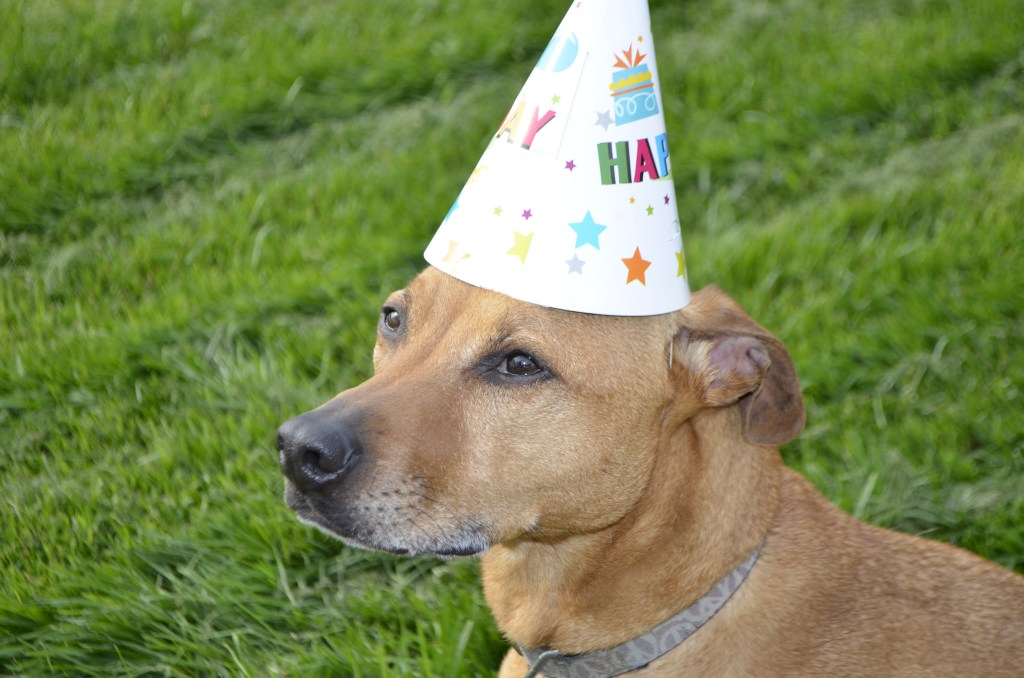 Cooper in a party hat