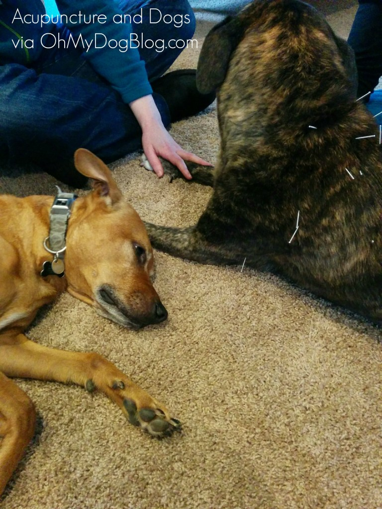 Acupuncture and dogs via OhMyDogBlog.com