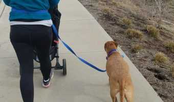 Are you ever done training your dog_ Is your dog ever _trained__