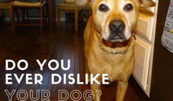 Do you ever dislike your dog?