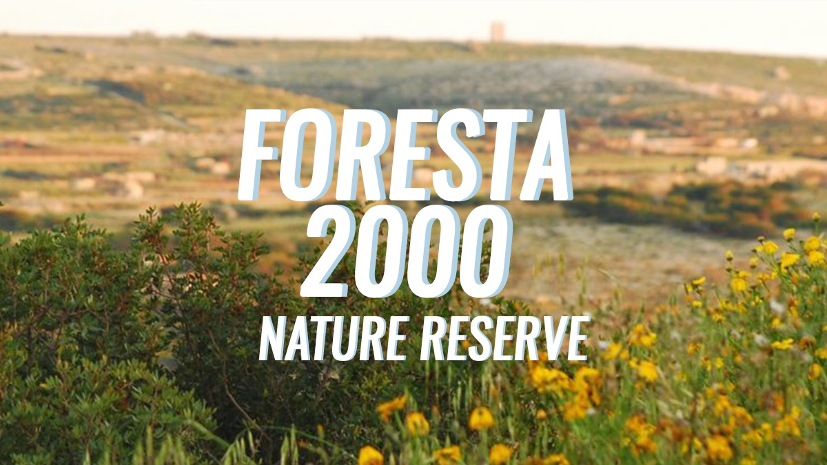 Nature Reserve Series: Foresta 2000