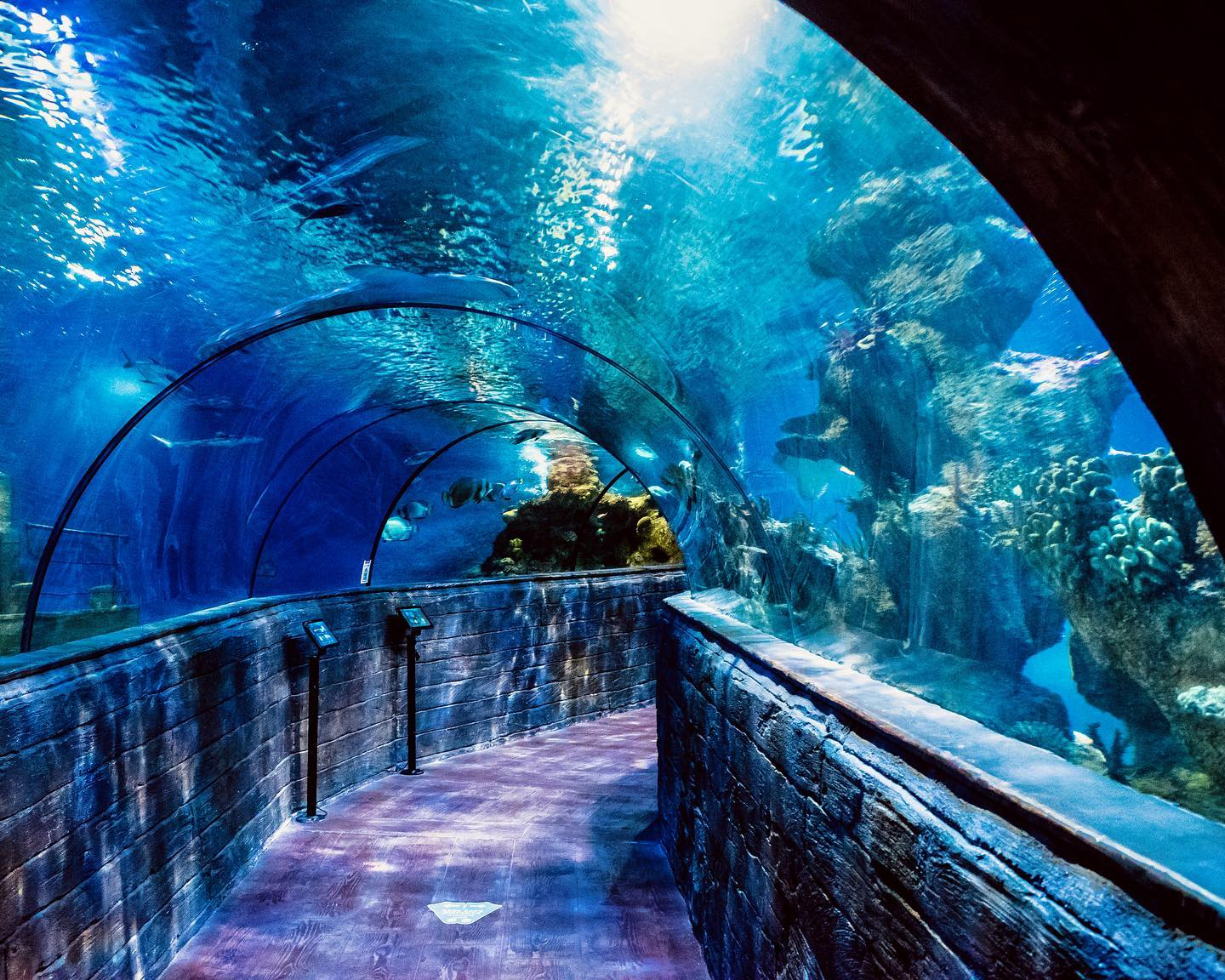 Read more about the article Watch: Underwater CCTV camera installed at the national aquarium