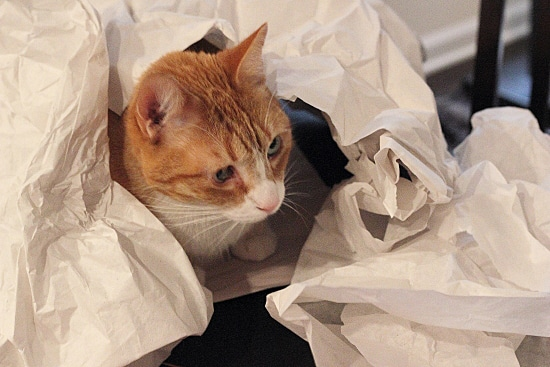 Miso Playing with Tissue Paper