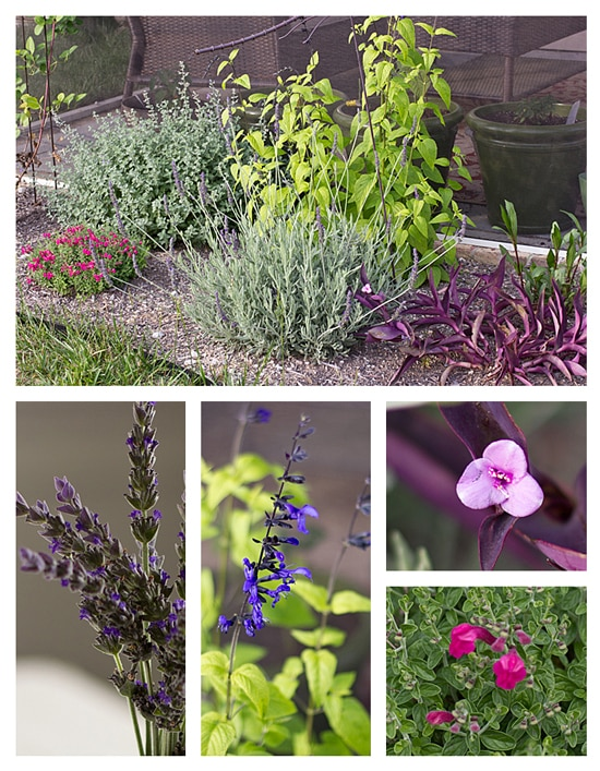 Perennial Garden - May 2012