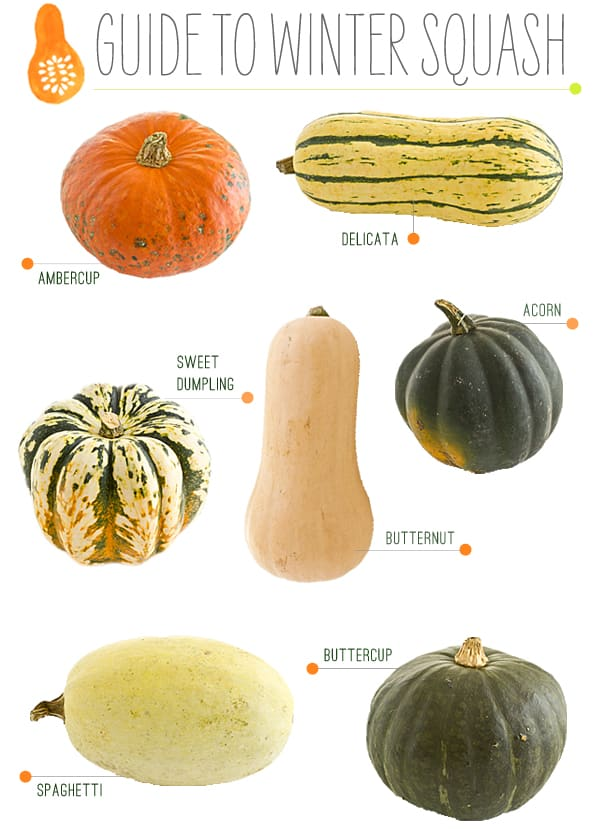 Guide to Winter Squash