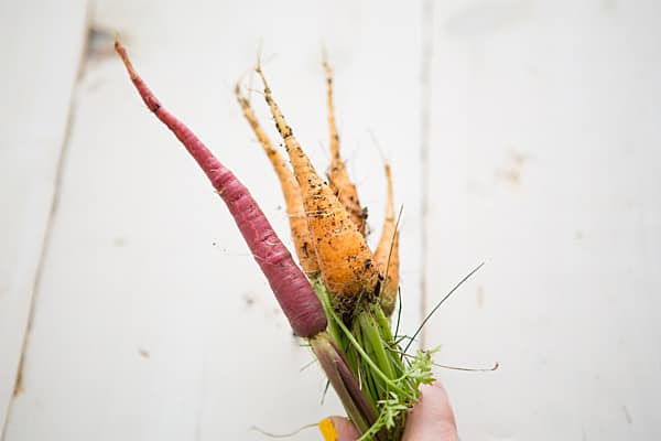 Carrots - July 2013
