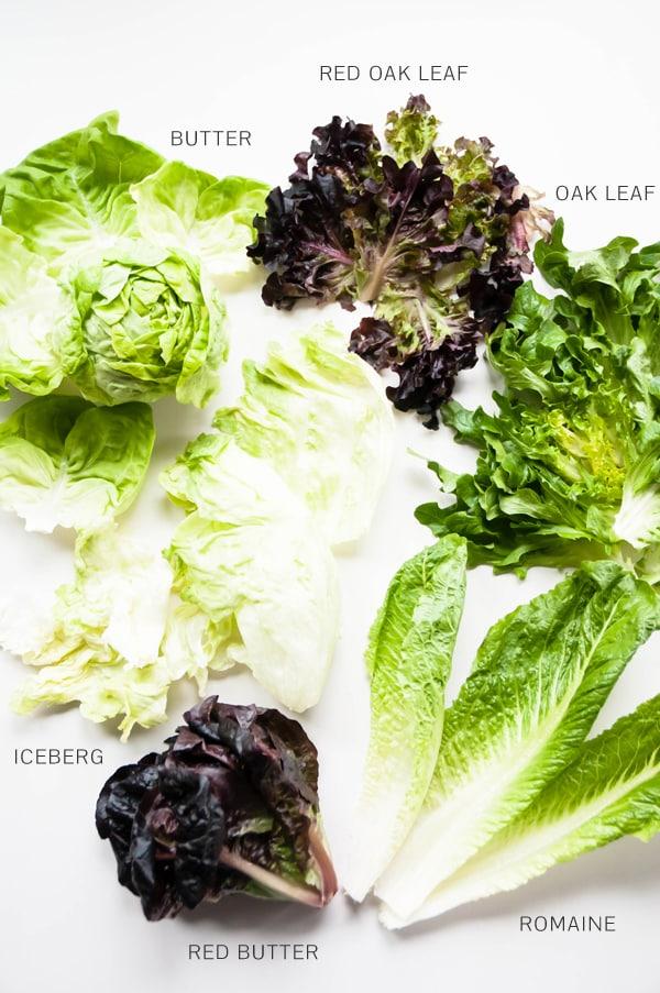 Lettuce Family