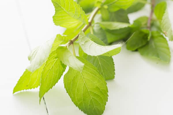 4 Ways to Use Fresh Mint