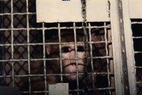 Esta é Sarah - ela foi obtida pelo instituto um dia após o nascimento. Ela permaneceu durante 8 anos confinada em uma minúscula e estéril gaiola.