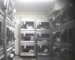 Havia cerca de 100 coelhos no laboratório.