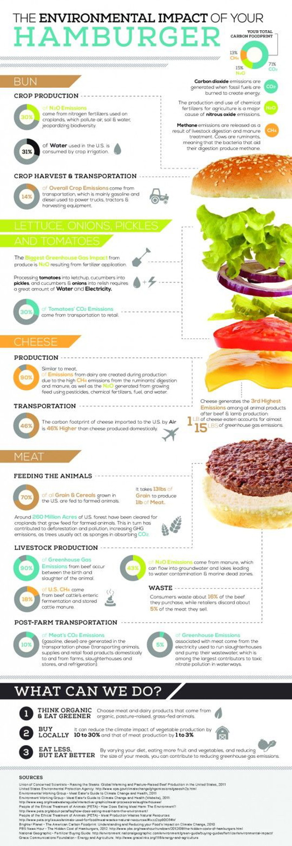Burger Infographic