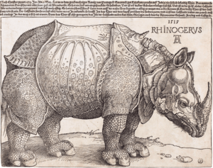 the_rhinoceros_nga_1964-8-697_enhanced