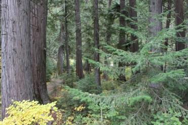 The forest floor -- Devoto Grove