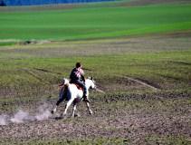 Farm owner rides his Arabian through the fields