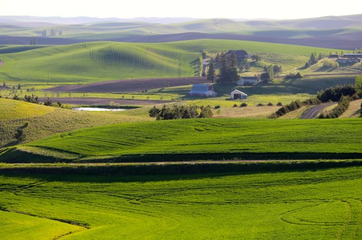 The many colors of the Palouse