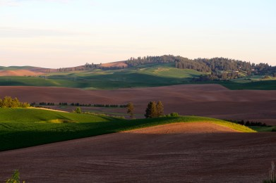 Sundown on the Palouse