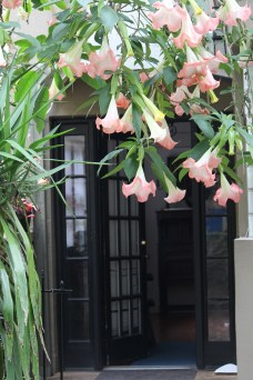 Open doorway draped with soft pink blooms