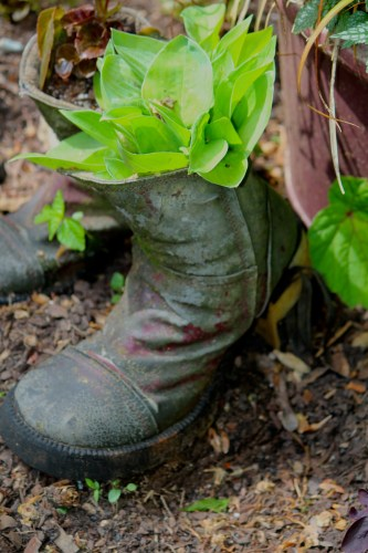 An old boot filled with plants.
