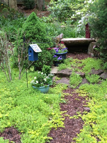 Natural, free-flowing landscape of Suzie Hall's garden