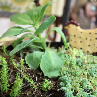 Terrarium with chicken from H and H Botanicals