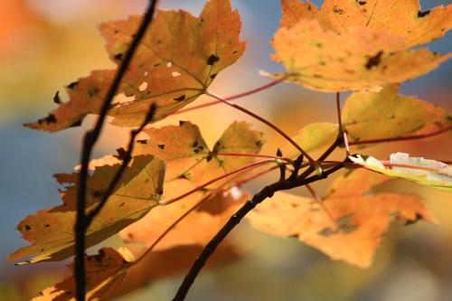 Fall foliage at New River Gorge Bridge