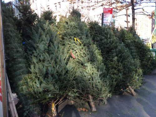 Piled up at a street corner shop, Christmas trees wait for NYC shoppers!