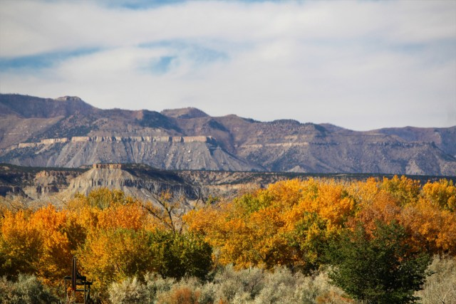 Rows of fall-colored shrubs snugged up to majestic mountains. Somewhere in Utah.