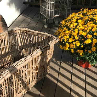 Mums and baskets -- Marston House, Wiscasset