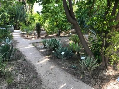 Pathways defining planting areas at Jnane Tamsna