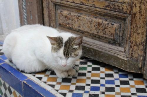 Asleep on the stoop: Bahia Palace, Marrakech