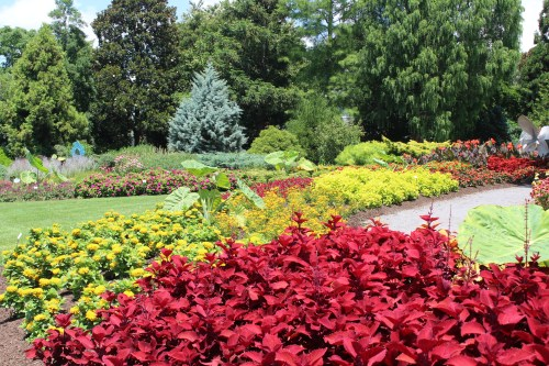UT Color Garden, July 2020