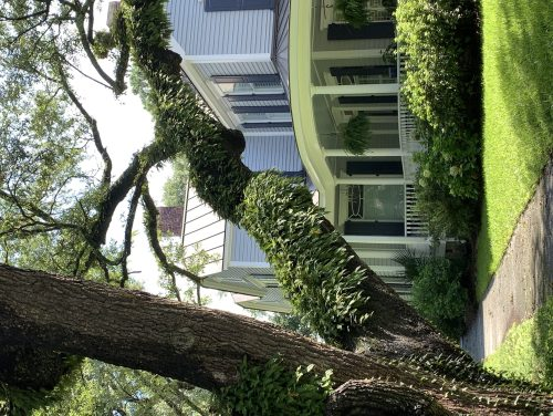 Georgetown SC home with curved porch, arching tree
