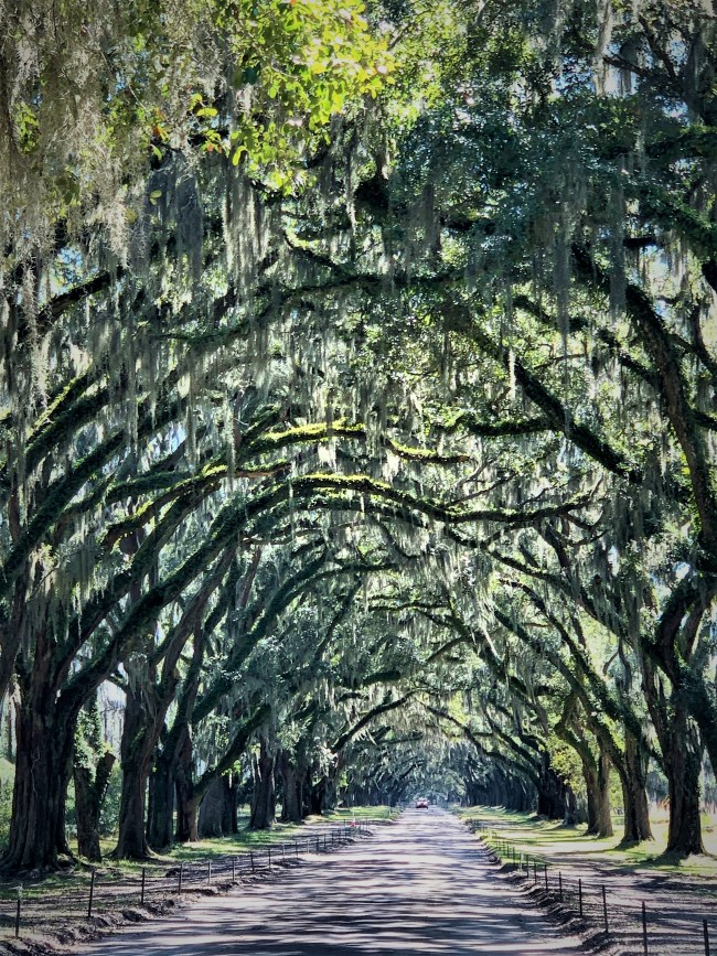 Main drive, Wormsloe Historic Site, GA