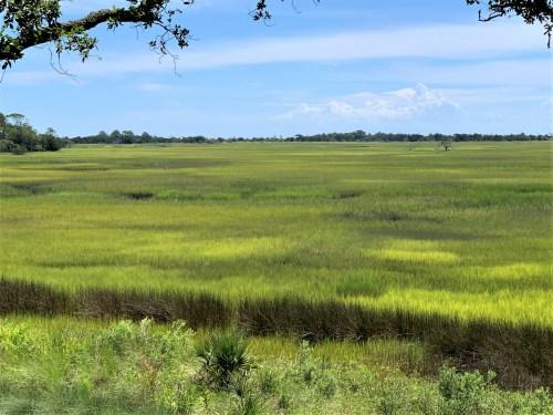 Green marsh grass in Kiawah Island, SC