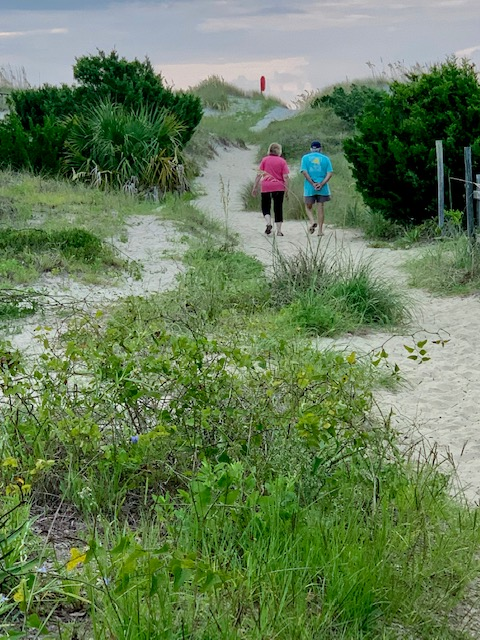 Pawleys North End: early morning shelling expedition