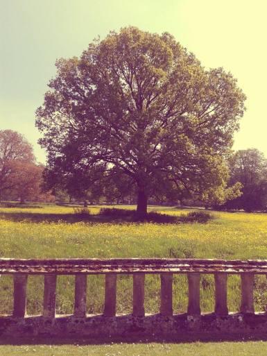 My favourite: a beautiful tree