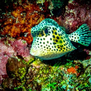 Trunk fish with Aquanauts Dive Adventures