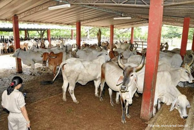 ganaderos colombia