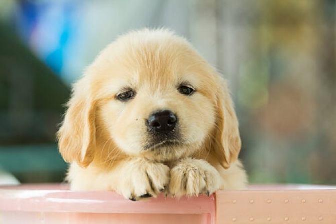 perro-triste (1)