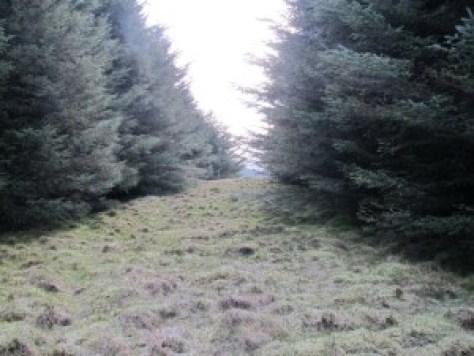 Summit of Henderston Hill