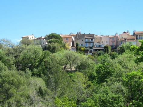 The forest below Mougins