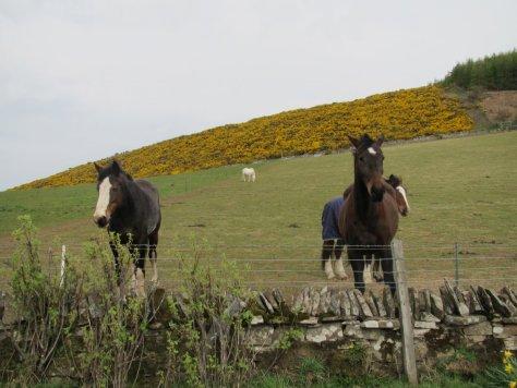 Friendly horses in Denoon Glen