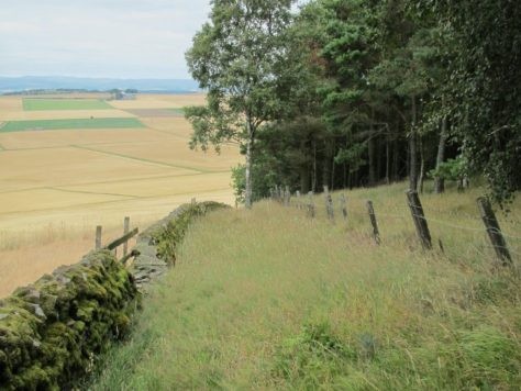 Grassy route on Fothringham Hill