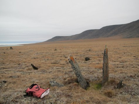 Musk Ox scratching post, Dream Head, Wrangel Island