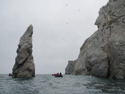 Zodiac cruising bird cliffs